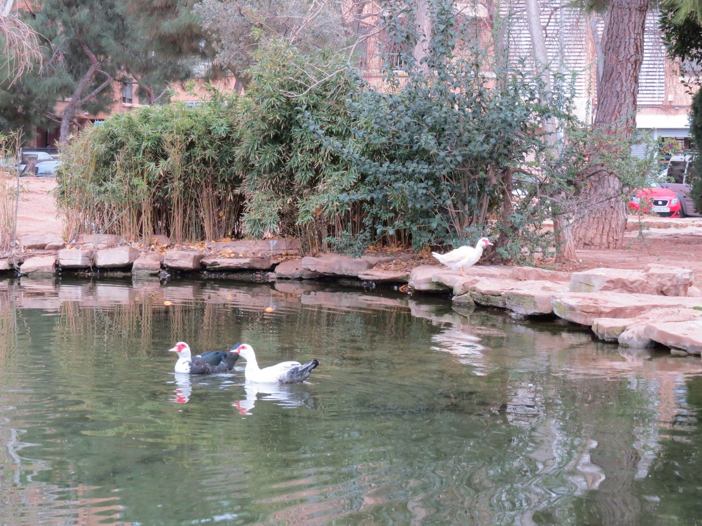 lago con animales