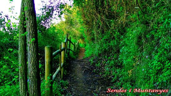 Ruta botánica Villareal